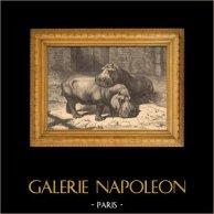 ippopotamo - Jardin des Plantes di Parigi - Giardino Botanico | Incisione xilografica originale. Anonima. 1880