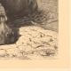 DETAILS 02   Hippopotamus - Jardin des Plantes of Paris - Botanical Garden