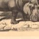 DETAILS 03   Hippopotamus - Jardin des Plantes of Paris - Botanical Garden