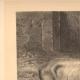 DETAILS 04   Hippopotamus - Jardin des Plantes of Paris - Botanical Garden