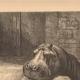DETAILS 05   Hippopotamus - Jardin des Plantes of Paris - Botanical Garden