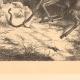DÉTAILS 03 | Jeune Cerf Attaqué par des Serpents