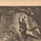 DÉTAILS 05 | Jeune Cerf Attaqué par des Serpents