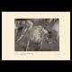 DÉTAILS 03 | Impressionnisme - Ballet - Etude de Danseuses (Edgar Degas - 1879)