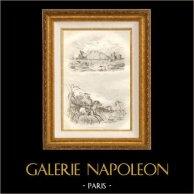 Ile de la Trinité - Caraïbes - Baleines - Chasse au Cheval Sauvage | Gravure sur acier originale dessinée par Louis Auguste de Sainson, gravée par Beyer. 1834