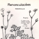 DETAILS 01   Botany - Botanical - Ranunculaceae - Ranunculus - Acris - Repens