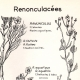 DETAILS 01   Botany - Botanical - Ranunculaceae - Ranunculus - Fluitans - Sceleratus