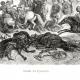 DÉTAILS 01   Histoire de Napoléon Bonaparte - Guerres Napoléoniennes - Bataille des Pyramides (1798) - Campagne d'Égypte