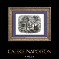 Geschichte von Napoleon Bonaparte - Koalitionskriege -  Feldzug in Deutschland - Sechste Koalition