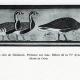 DÉTAILS 02 | Egypte Antique - Egyptologie - Nécropole - Hiéroglyphes Egyptiens dans la Chapelle Funéraire du Mastaba de Hesi à Saqqarah - Sakkarah - Oies de Meidoum