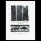 DÉTAILS 03 | Egypte Antique - Egyptologie - Nécropole - Hiéroglyphes Egyptiens dans la Chapelle Funéraire du Mastaba de Hesi à Saqqarah - Sakkarah - Oies de Meidoum