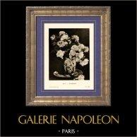Pivoines - Nature morte (Edouard Manet)   Héliogravure originale sur papier velin d'après Edouard Manet. Anonyme. 1910