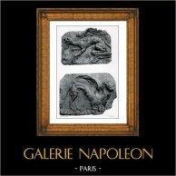 Flachreliefs - Greif - Bas Relief - Terre Cuite - XVIIIème Siècle - Griffons - Ecole Française - Musée des Arts Décoratifs | Original phototypie von Berthaud. 1894
