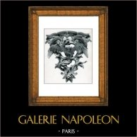 Décoration - Console d'Applique en Terre Cuite - Dragon Ailé - Style Rocaille - Epoque Louis XV