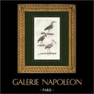 Birds - Black-crowned night heron - Boat-billed heron - Spoonbill