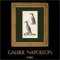 Birds - Sea bird - Great auk - Emperor penguin