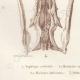 DETAILS 03   Reptiles - Snake - Jaw - Typhlops - Typhlops reticulatus