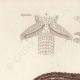 DETAILS 01   Reptiles - Sauria - Lizard - Neusticurus bicarenatus