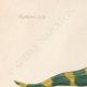 DETAILS 01   Amphibians - Urodela - Axolotl - Barred Tiger Salamander - Ambystoma tigrinum