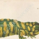 DETAILS 03   Amphibians - Urodela - Axolotl - Barred Tiger Salamander - Ambystoma tigrinum