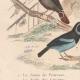 DETALLES 03 | Pájaros - Passeriformes - Verdecillo - Pardillo piquigualdo - Amandava - Bluebill