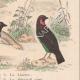 DETALLES 06 | Pájaros - Passeriformes - Verdecillo - Pardillo piquigualdo - Amandava - Bluebill