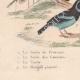 DETALLES 07 | Pájaros - Passeriformes - Verdecillo - Pardillo piquigualdo - Amandava - Bluebill