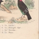 DETALLES 08 | Pájaros - Passeriformes - Verdecillo - Pardillo piquigualdo - Amandava - Bluebill