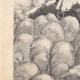 DÉTAILS 02 | Gargantua et Pantagruel - Rabelais - Mouton