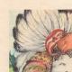DÉTAILS 01 | Gargantua et Pantagruel - Rabelais - Indiens d'Amérique