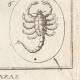 DÉTAILS 06   Antiquité - Abraxas - Amulette - Talisman