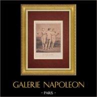 Nu Artistique - Les Trois Grâces (Raphaël)