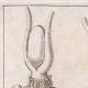 DETAILS 01 | Oude Egypte - Isis - Hoorn - Zonneschijf