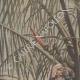 DÉTAILS 01   Guerre hispano-américaine - Surveillance dans un cocotier - 19ème Siècle