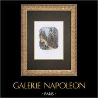 Landscape of Grande Chartreuse - Savoy (France)