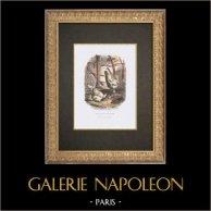 Gallinacés - Coq - Poule - Race Nègre soie