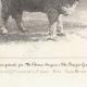 DÉTAILS 05 | Races Ovines - Mouton - Bélier - Race Merinos
