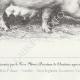 DÉTAILS 05 | Races Porcines - Truie - Race Woburn