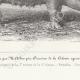 DÉTAILS 05 | Races Porcines - Truie - Race Augeronne