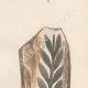 DÉTAILS 05   Plantes et Fleurs - Champignon - Clathre rouge - Clathrus ruber - Phallaceae