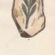 DÉTAILS 08   Plantes et Fleurs - Champignon - Clathre rouge - Clathrus ruber - Phallaceae