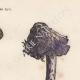 DETAILS 04   Mushrooms - Amanita muscaria - Amanita vittadinii
