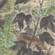 DÉTAILS 05 | Leiocephalus Grayi - Pyrocephalus Nanus - Tenagra Darwin (Îles Galápagos)