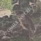 DÉTAILS 06 | Leiocephalus Grayi - Pyrocephalus Nanus - Tenagra Darwin (Îles Galápagos)