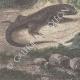 DÉTAILS 07 | Leiocephalus Grayi - Pyrocephalus Nanus - Tenagra Darwin (Îles Galápagos)