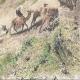 DÉTAILS 06 | Pèlerinage au Nejd - Nedjed - Akabah dans le Désert - Caravane (Arabie Saoudite)