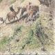 DÉTAILS 08 | Pèlerinage au Nejd - Nedjed - Akabah dans le Désert - Caravane (Arabie Saoudite)