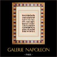 Papillon - Rapala - Thecla