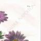 DÉTAILS 03 | Fleurs du jardin - Reine-Marguerite ou Aster de Chine