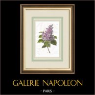 Garden Flowers - Lilac